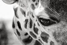 animals / by Michelle Stebbins