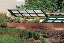 Gardening Ideas / by Vicky Johnston Harrell