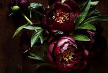 bordeaux / by Michelle Stebbins