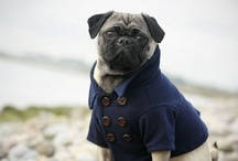 The pug obsession / by Wendy A