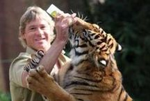 TIGERS!!! & other cats / by Pat Barrows