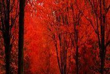 Celebrate Fall / by Dr. Linda Welker