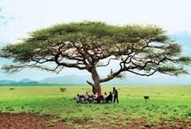 Africa / by Condé Nast Traveler