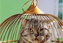 BIRDIE CAGES / by Margie Barr