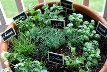 Herbs / by misspe.