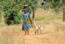 Food Security & Agriculture / by Africare