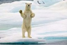 Polar Adventure Travel / Save big on your #adventure #holidays to the #Arctic and #Antarctic with our 5 great offers on a range small group tours ~ http://bit.ly/polar-sale / by Intrepid Travel