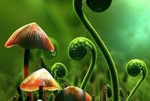 Toadstools and Mushrooms / by Kimberly Walker