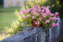 Yard & Garden / by Lynda Hammers