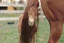 Horses / by Ramona Powell