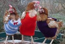chickens / by Rosanna Van Etten