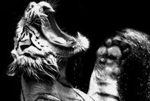 animals / by gabberc (⌐■_■)
