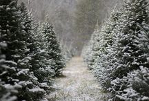 Christmas/Winter / by Erin Evans