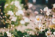 ~garden~ / One day I will own a garden / by Lou Archell | littlegreenshed