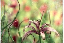 blossom-chasing / by Jill R