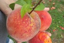Garden / Orchard / by Sheryl Scott