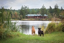 Awesome Pet Friendly Places / by Tink Bastian