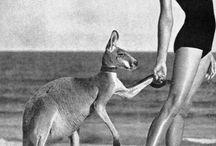 ANTIPODES / Australia, Australian / by Tamara Fawahl