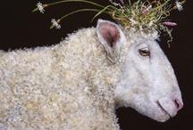 Baa baa black sheep / by Sue Lambson