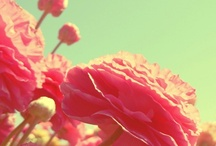 flowers / by Scoots Lovely