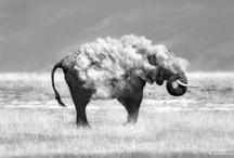 Elephant / by La Vie Est Belle