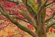 Trees / by Pamela Kruger