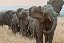 Elephantes! / by Madeline Smith