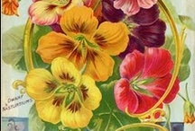 Vintage seed packets & catalogs / by Sara Harte
