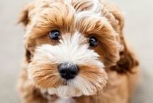 woof it ::dogs & puppies:: / by Entwined Blog