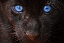 Pets & Animals / by Alessandro Accebbi
