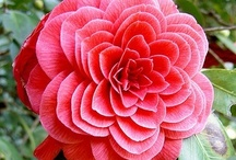 Flowers / by Beth Coward