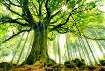 Trees / by Beth Coward