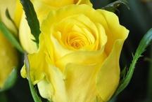Love yellow / by Beth Coward