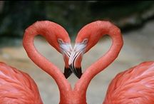 Pink Flamingo Love / Pink & Flamingo's ( my grandaughter calls them Mingo's) / by Cathy (Claymate) Heuchan