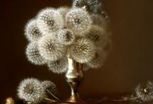 Floral Art / by Patty Austin