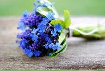flowers / by Nastya Ulan