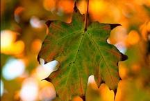 Fall Y'all / by Esther Glumace