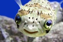 Smile - You're at the Ocean! / by NC Aquarium at Fort Fisher