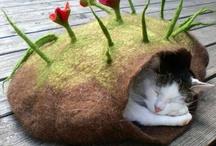 Pet Beds / by Julie Miller