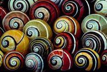 Φ Natures  Fractals, Golden Ratio Φ,  Fibonacci 1.6180339887 / Golden Ratio, Fractals, Fibonacci in Nature. 1.6180339887 / by Keith Pings