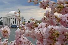 Washington, D.C. / by Scarlet Caps
