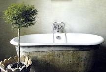 fresh bath rooms  / by Jo Pintar HOME