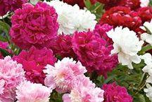 Fleurs / Flowers / by Isabel Bernier