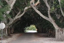 Tunnels of Trees / by Sue Nickel Brunson
