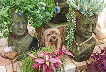 Mountain West Garden / by Lucinda Chumley