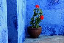 Plants & flowers / by Nuria