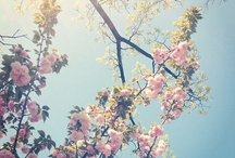 Spring / by Cielo Brunetti