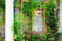 Garden / by Angela Kratt