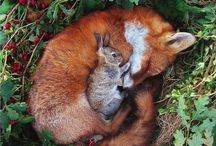 FOR THE LOVE OF ALL CREATURES / by Vanessa Walton