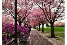 Spring  / by Angela Kratt